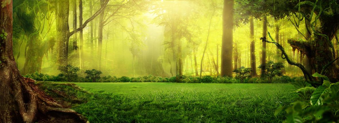 绿色梦幻森林淘宝背景背景图片下载_1920x700像素jpg