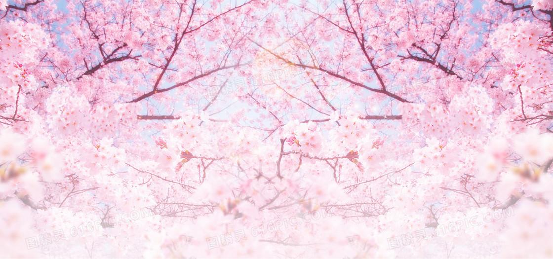 粉色浪漫樱花节旅游背景