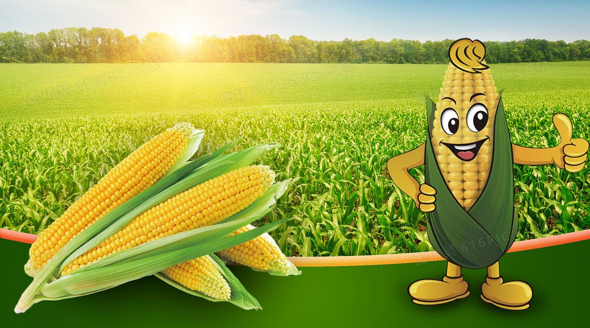 绿色玉米田卡通玉米海报背景素材