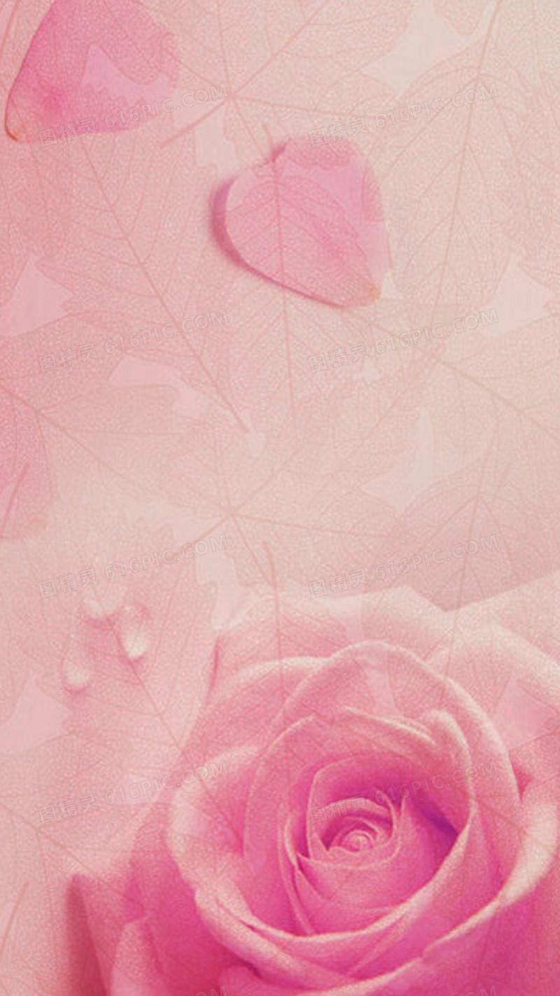 粉色玫瑰花H5背景
