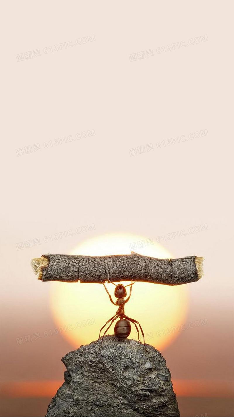 日出蚂蚁创意商业h5背景