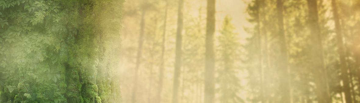 梦幻 暖色 清新 商务 淘宝背景 抽象 森林 科幻