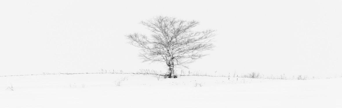 简约素描白雪枯树背景