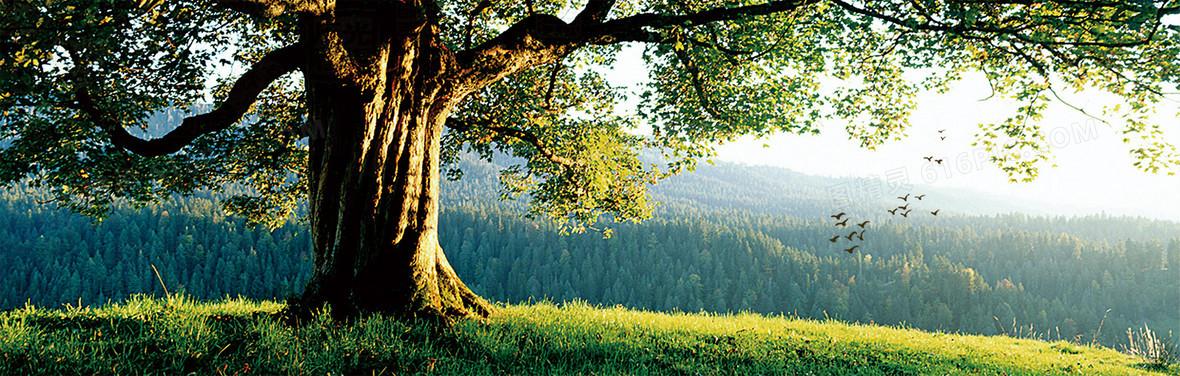 壁纸 风景 森林 桌面 1180_376