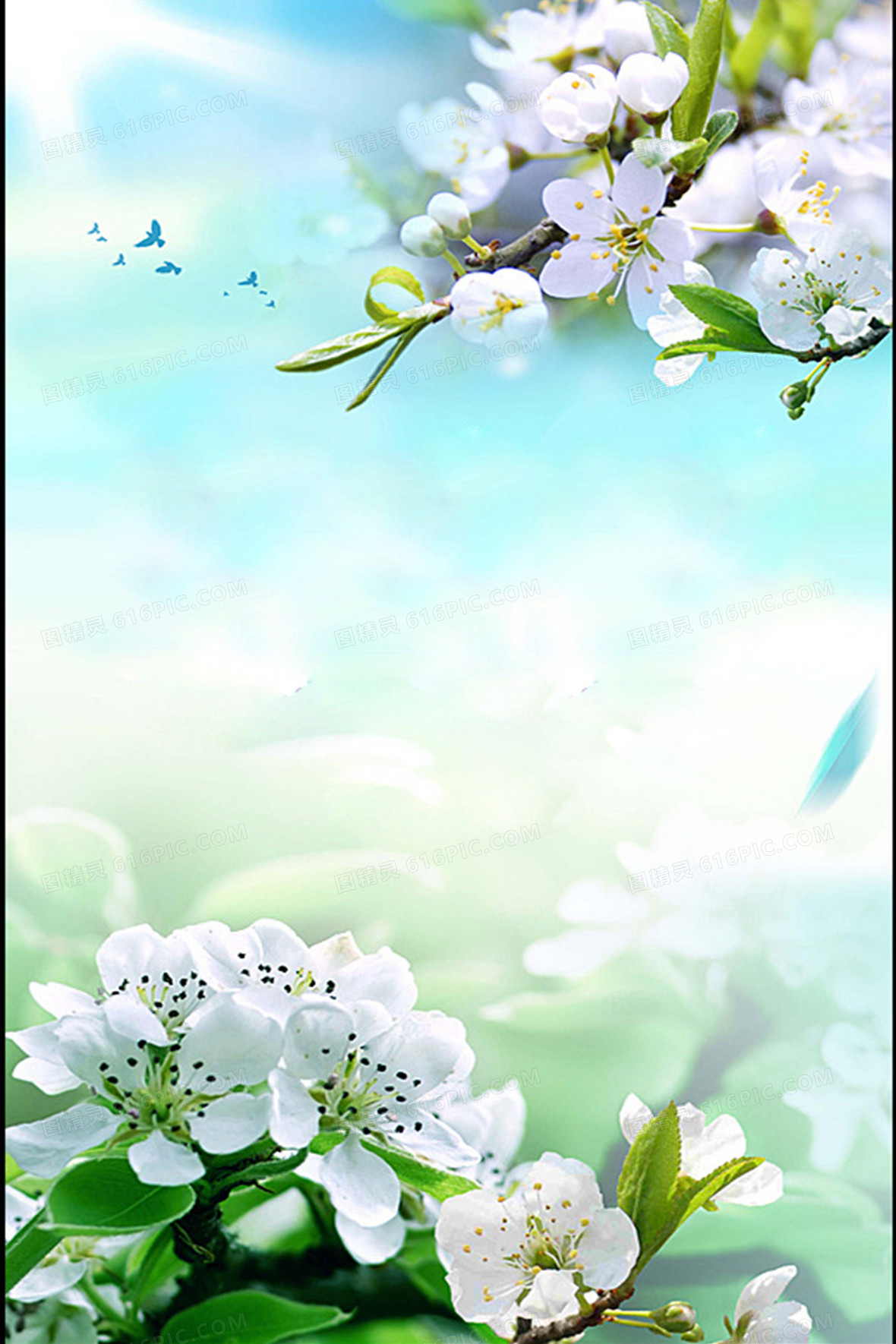 春季玉兰花背景素材