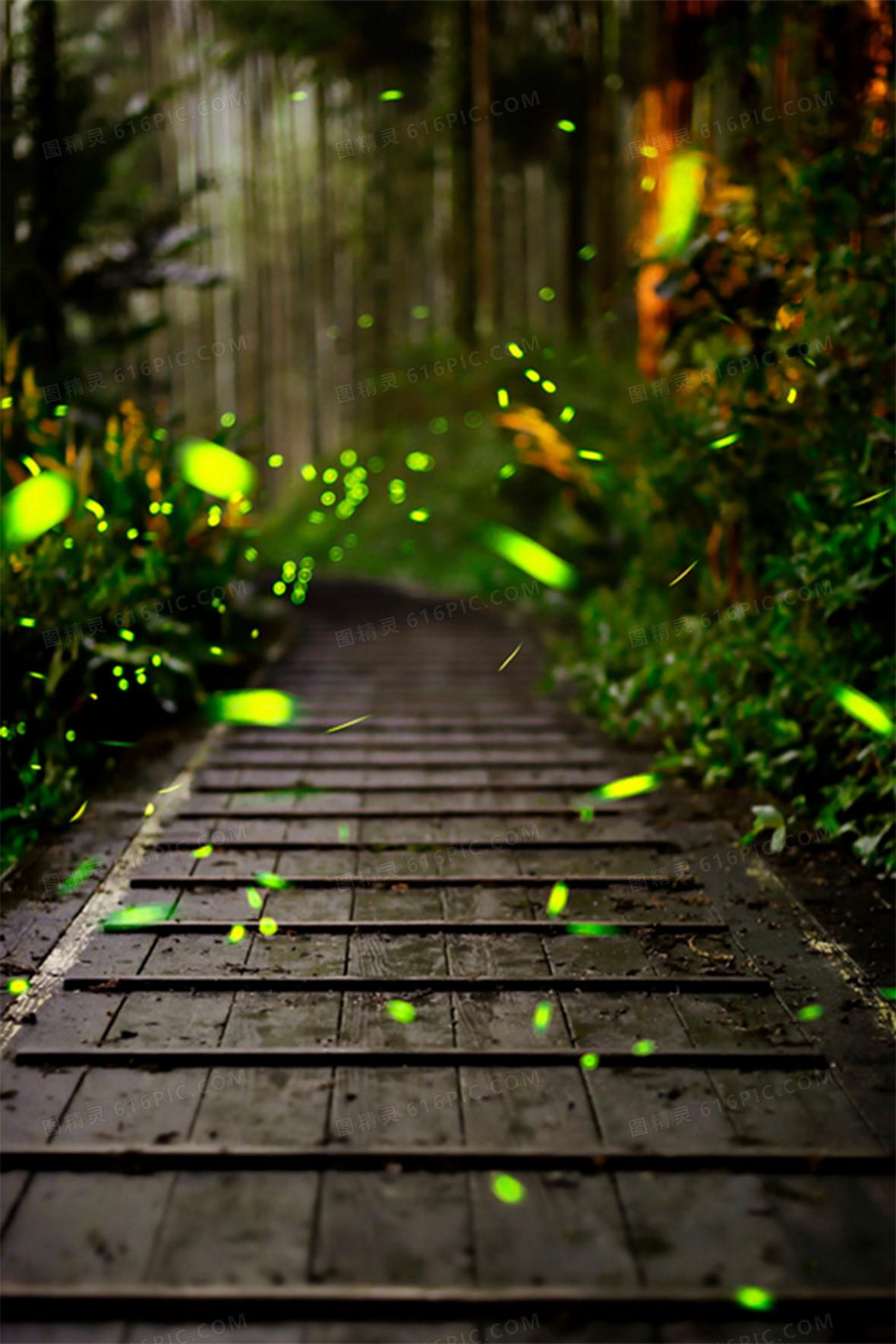 绿色森林小路萤火虫摄影平面广告