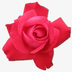 玫瑰樱桃肖像图片免费下载 Png素材 编号18migox7v 图精灵