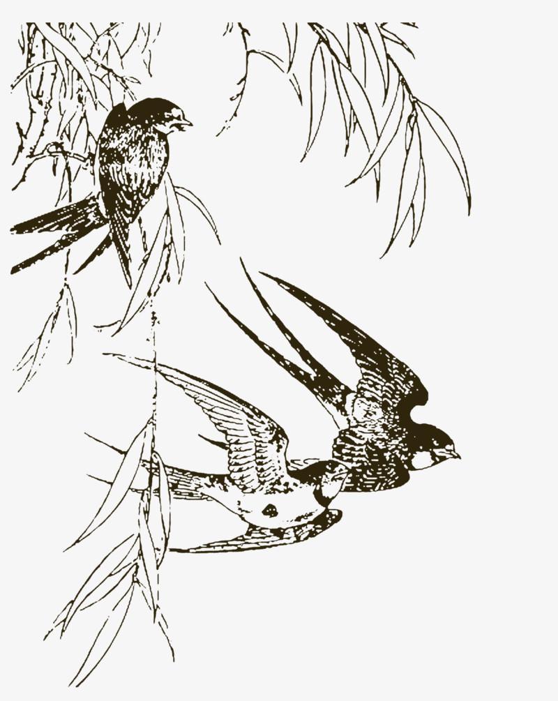 手绘燕子图片免费下载_高清png素材_图精灵