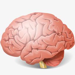 人体大脑的图标图片免费下载 Png素材 编号13gilwz 图精灵