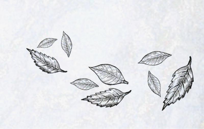 黑白手绘创意落叶图片免费下载_高清png素材_图精灵