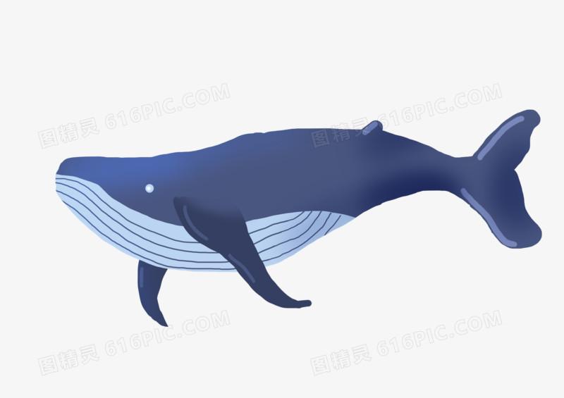 手绘卡通免扣动物鲸鱼元素