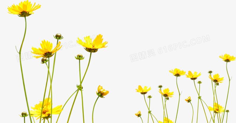 春天黄色小花