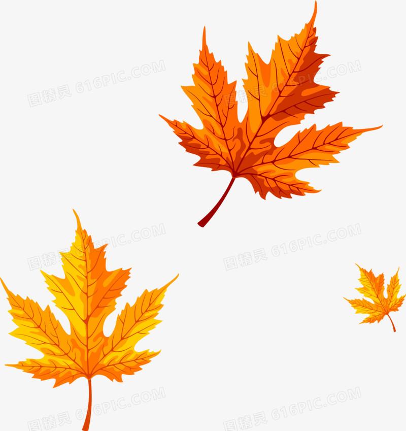 秋天落叶枫叶
