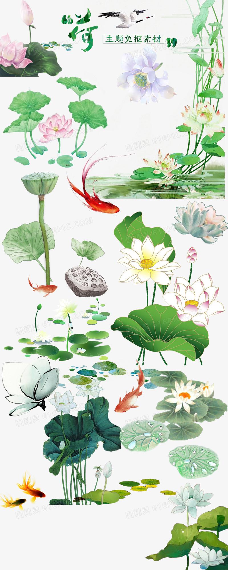 荷花免抠图手绘素材中国风