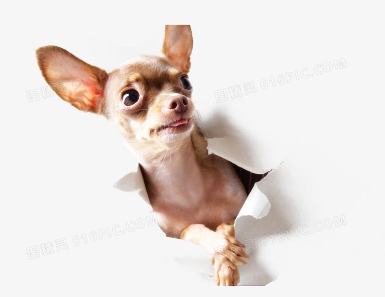 可爱的小狗素材图片