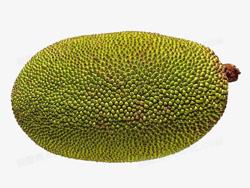 菠萝蜜图片免费下载_高清png素材_图精灵