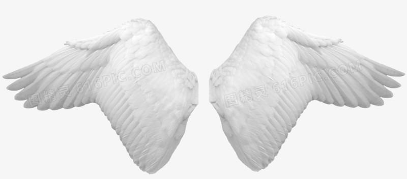 天使翅膀图片免费下载_高清png素材_图精灵