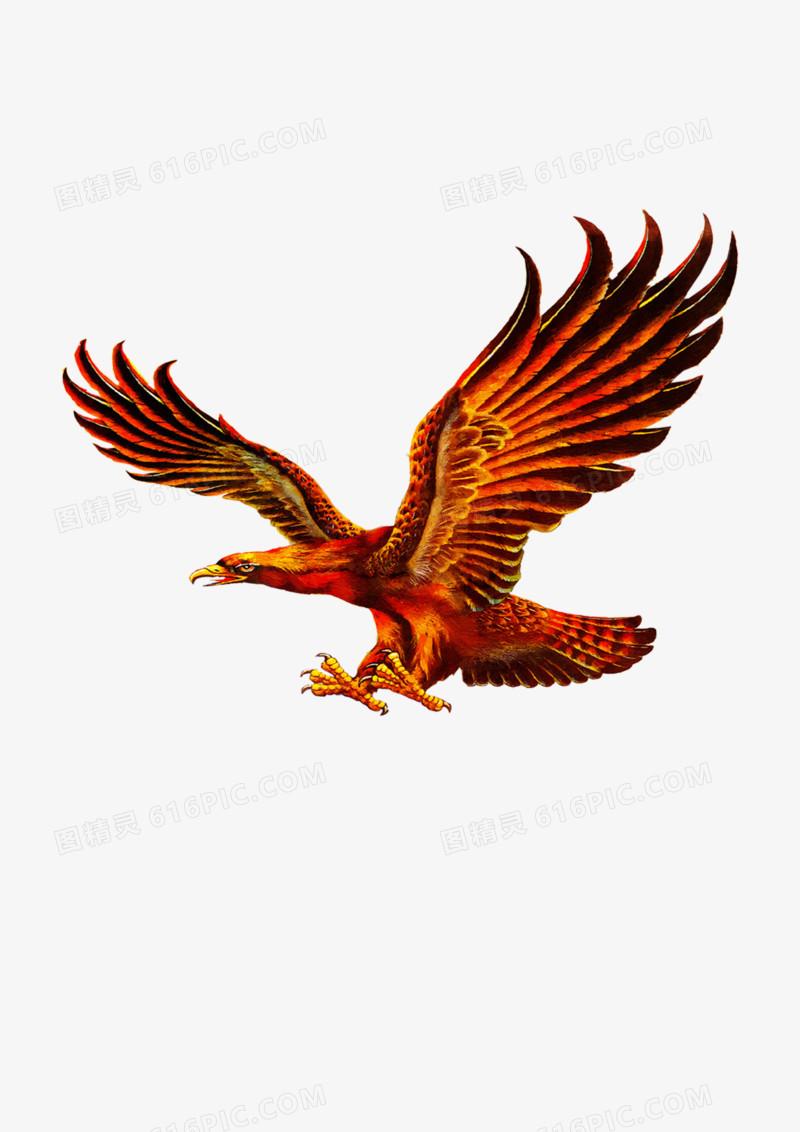雄鹰展翅飞翔图片免费下载_高清png素材_图精灵