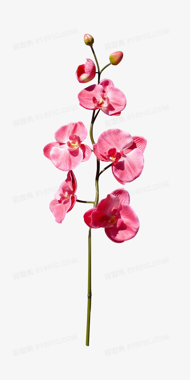 卡通鲜花素材手绘花朵 唯美粉色小花