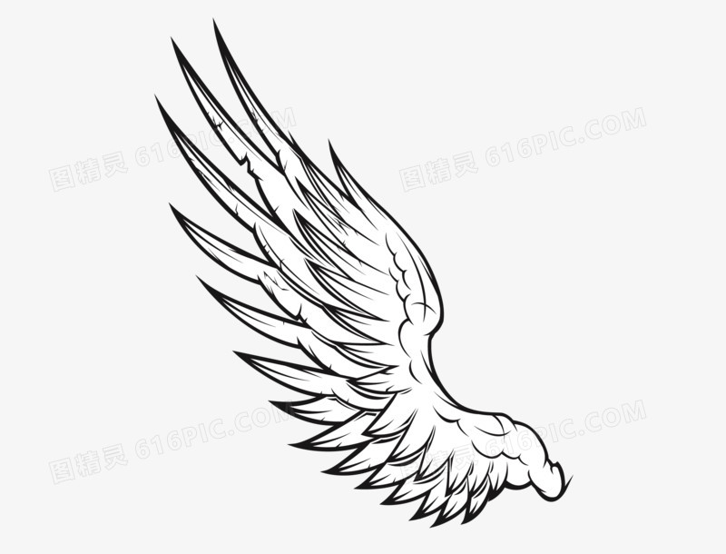 白色翅膀图片免费下载_高清png素材_图精灵