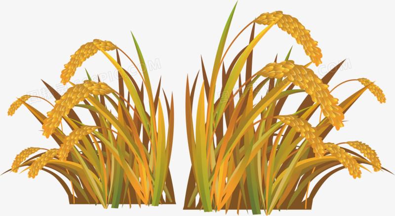 稻田矢量图