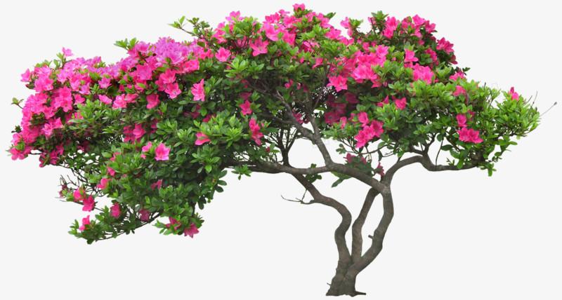 鲜花图片素材手绘花朵图片素材 花束 花树