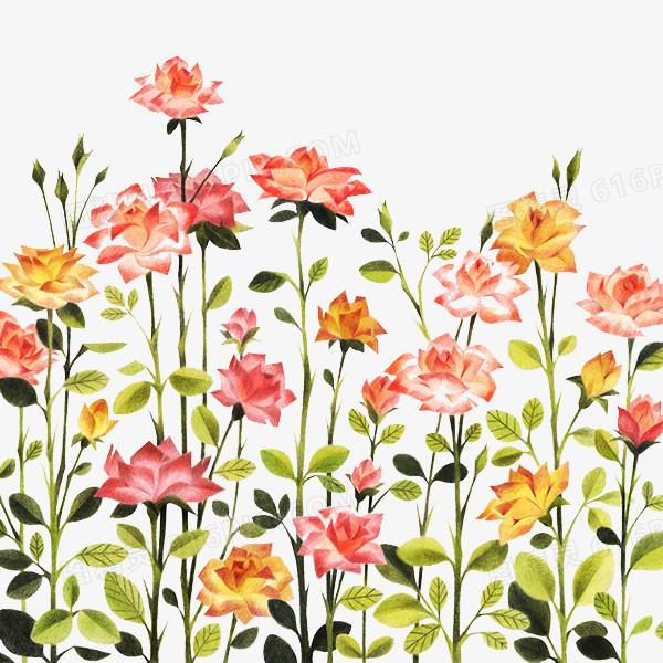 手绘玫瑰花丛图案