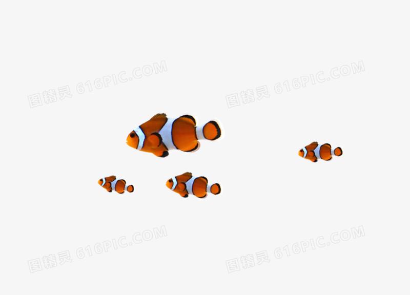 小丑鱼图片免费下载_高清png素材_图精灵