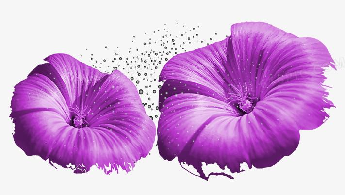 紫色花瓣图片免费下载_高清png素材_图精灵