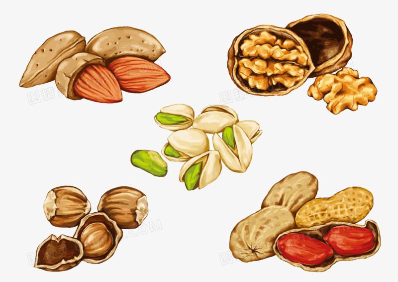 手绘零食坚果系列图片免费下载_高清png素材_图精灵