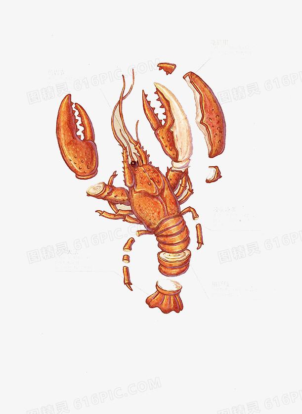 手绘小龙虾图片免费下载_高清png素材_图精灵