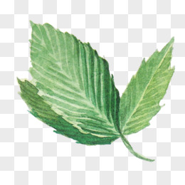 水彩画叶子图片
